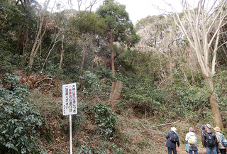 20-2ナラガレ被害.jpg