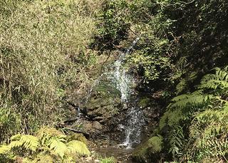 大楠山の滝.jpg
