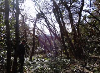 枯れた林.JPG